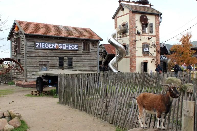 Urlaub auf dem Bauernhof gibt's zum Beispiel im Ziegengehege
