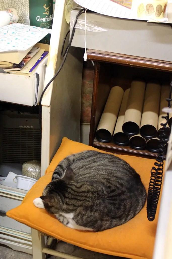 Wenn du die Augen aufhältst, entdeckst du in der Libreria Acqua Alta überalle Katzen
