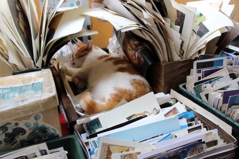 Zwischen Büchern und alten Postkarten haben die Katzen ihr Zuhause