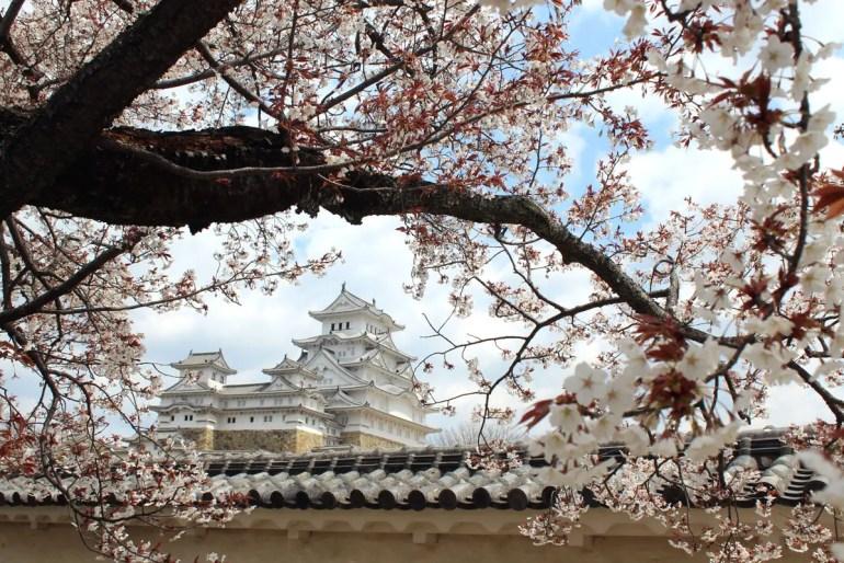 Ein beliebtes Ziel nicht nur zur Kirschblüte in Japan ist die Burg Himeji