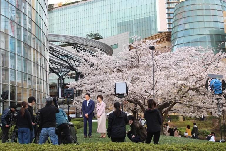 Über die Kirschblüte in Japan wird auch immer wieder im TV berichtet