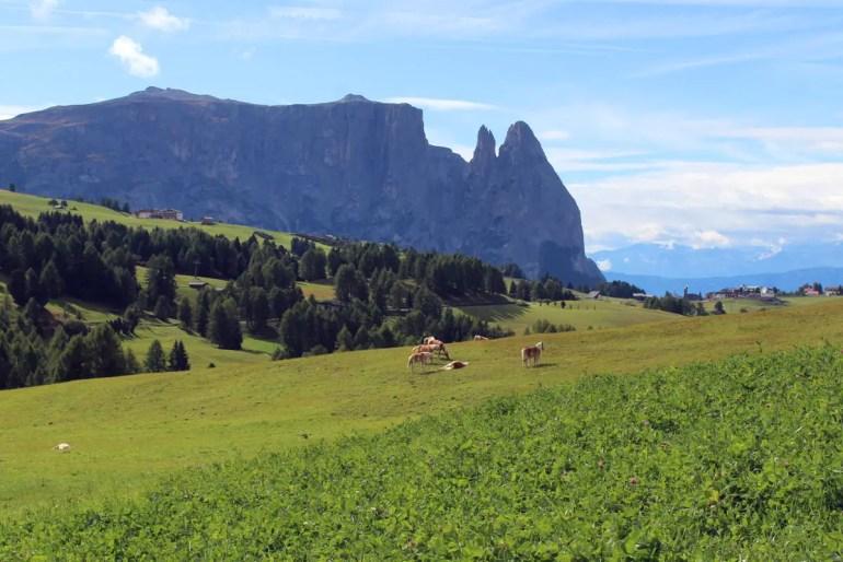 Wanderparadies vor beeindruckender Bergkulisse: die Seiser Alm