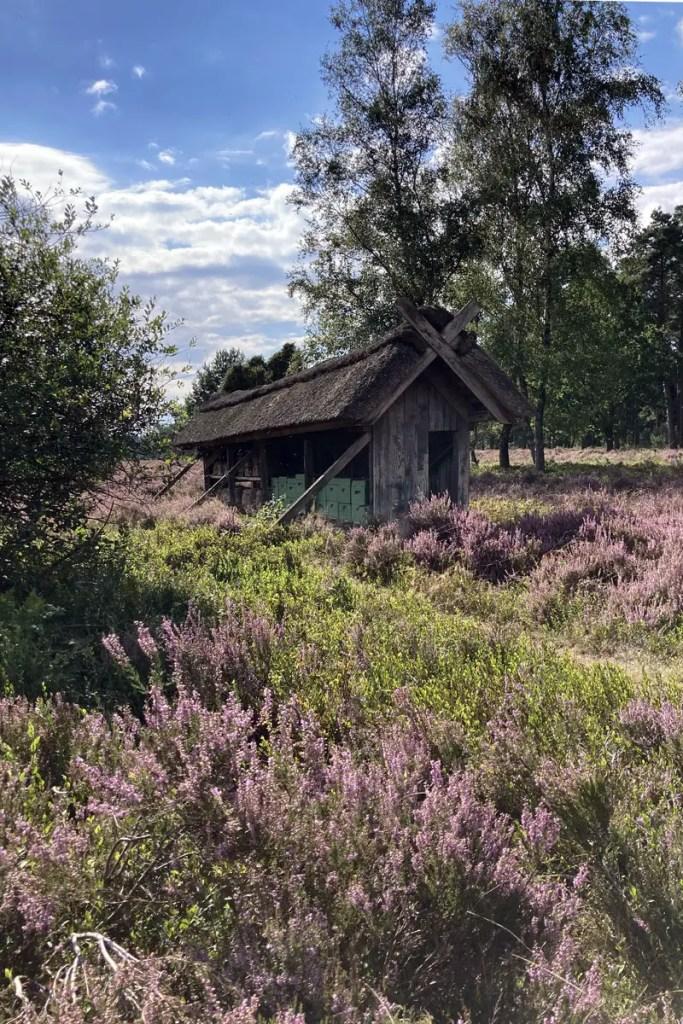 Der Heidehonig ist ein beliebtes Mitbringsel - hier im Bienenstock wird er produziert