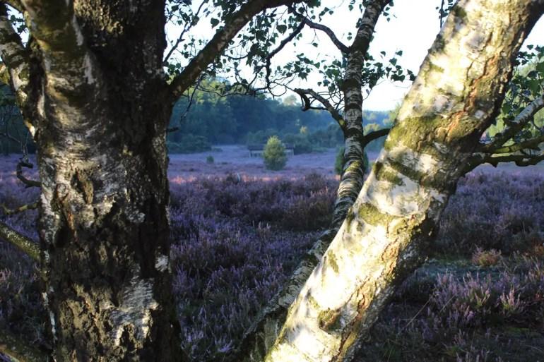 Morgens ist es in der Heide besonders schön