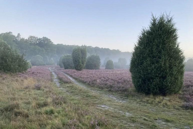 Morgens zieht der Nebel über die Wanderwege