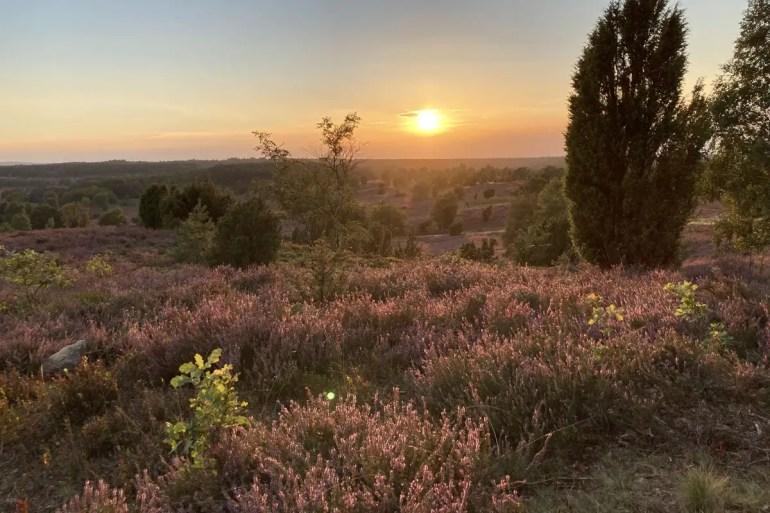 Romantisch: ein Sonnenuntergang am Wilseder Berg während der Heideblüte
