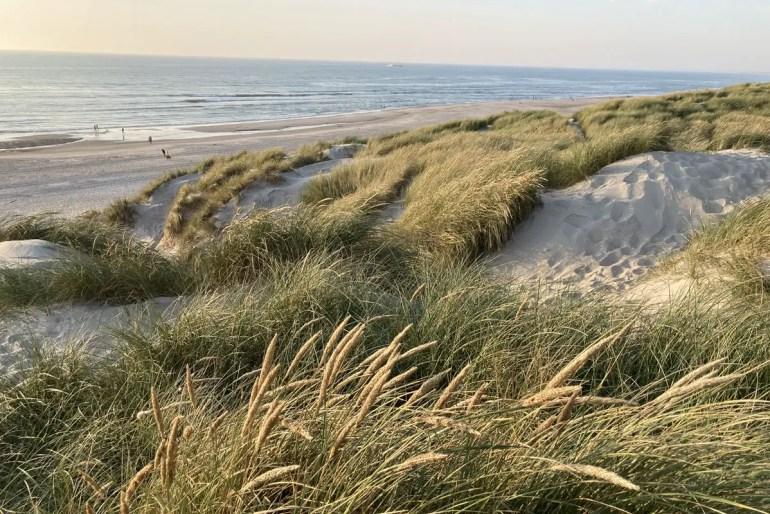 Die hohen Dünen sind typisch für die Nordseeküste in Dänemark