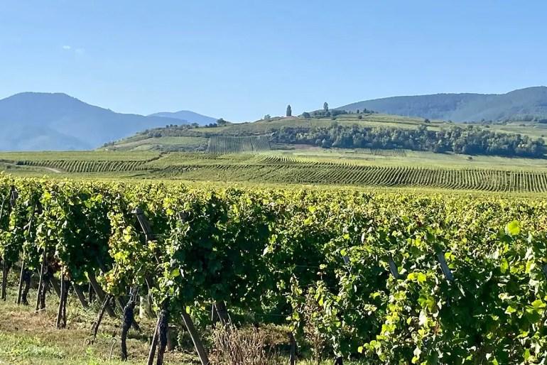 Die Elsässer Weinstraße ist ein beliebtes Reiseziel