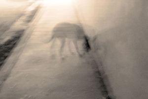 ghost_dog_5