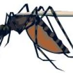 Insect Repellents: Which Ones Work? Which Don't?