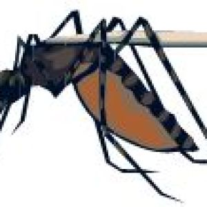 Tropical Travelers, Don't Forget Malaria Pills