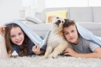 Remove Pet Odors and Stains | Heaven's Best Carpet Cleaning