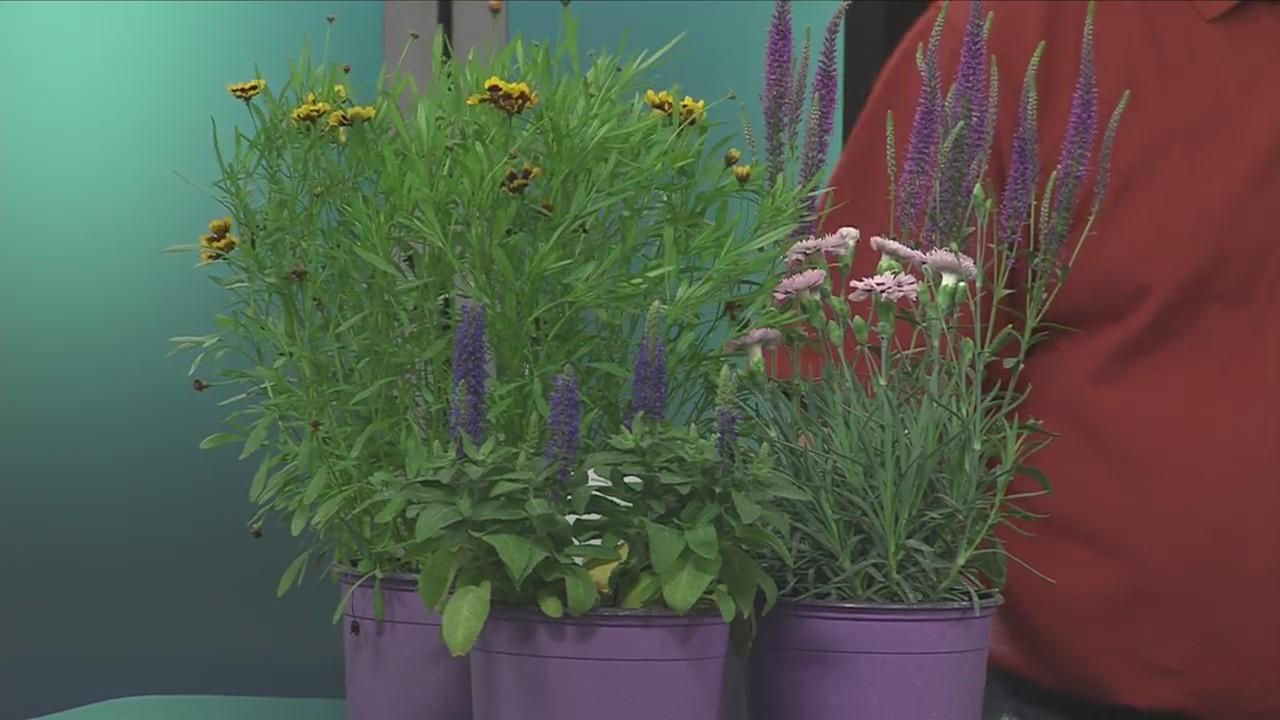Planting Perennials This Spring