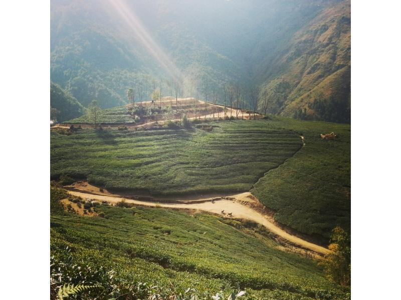 Everest Tea Garden Mini Illam  My Holiday Nepal Travel Blog