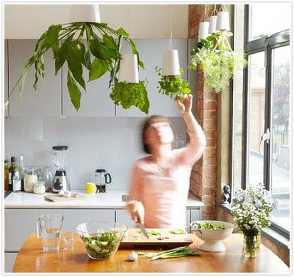 19 Best Images About Indoor Herbs On Pinterest Gardens Kitchen