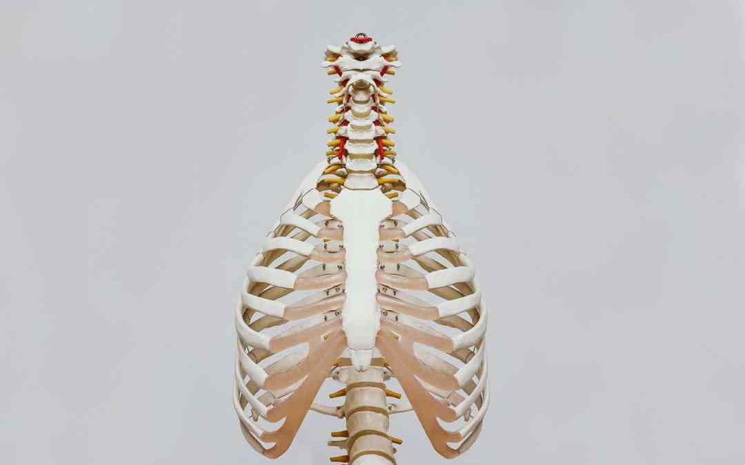 What Exactly Does a Chiropractor Do?