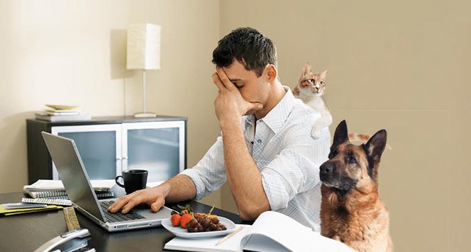 نتيجة بحث الصور عن working from home