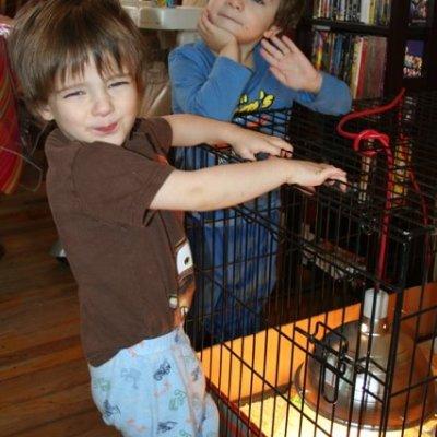 BAWK BAWK BAWK – Our First Backyard Chickens