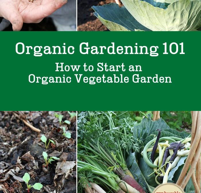 Organic Vegetable Gardening 101: How To Start an Organic Vegetable Garden
