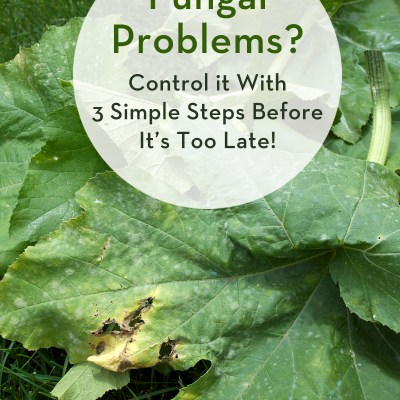How to Control Powdery Mildew with These 3 Simple Steps