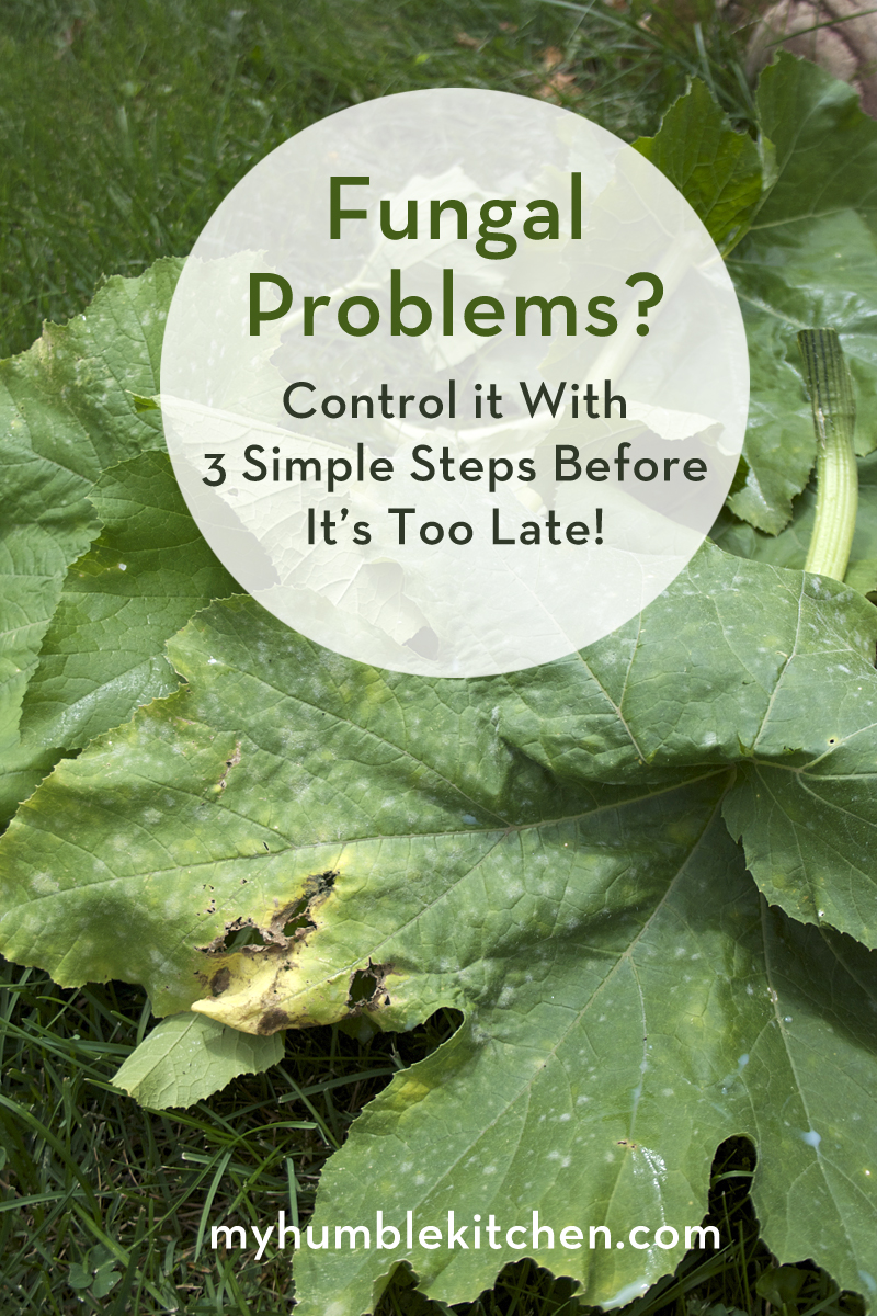 Fungal Problems? Control it with these 3 simple steps before it's too late! | myhumblekitchen.com