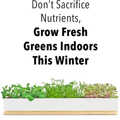 Grow Fresh Greens Indoors this Winter