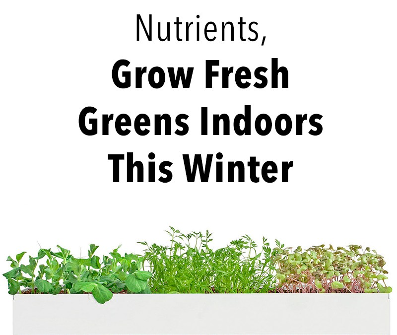 Grow Microgreens Indoors this Winter