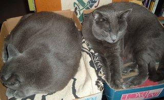 sleeping curledupcats