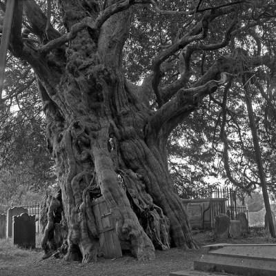 tree graveyard