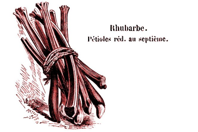 rabarber-rhubarbe