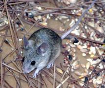 10 Interesting Mammal Facts My Interesting Facts