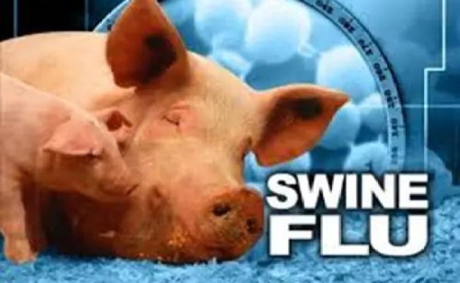10 Interesting Swine Flu Facts My Interesting Facts