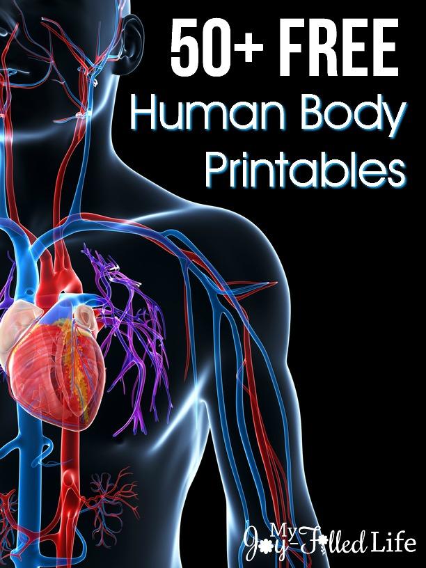 Body Systems Matching Worksheet Answer Key
