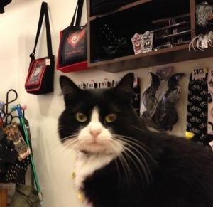 Reminiscence New York city new cat