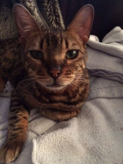 Dexter,  Ivana Franco's cat