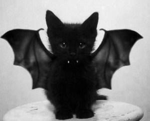 Halloween batcat Kitty costume