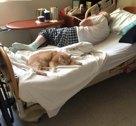 Vet and cat napping