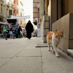 Kedi cats of Instanbul