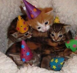 kitten birthdays