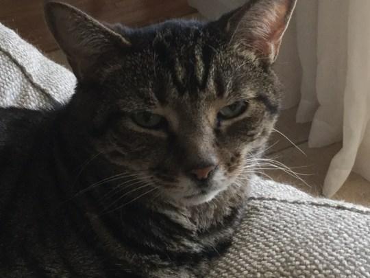 addressing an o,dear cat