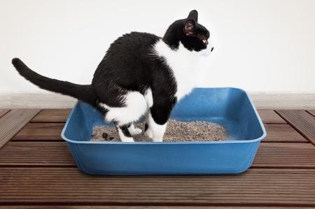 Cat S Poop Repellent