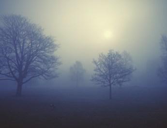 foggy morning west Park Macclesfield