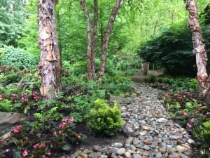 Woodland garden photo