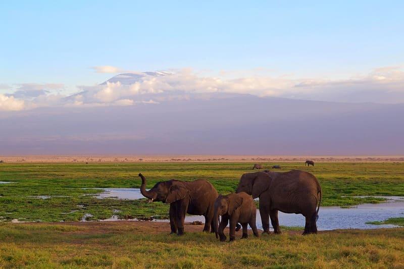 Afrique du Sud-parc national Kilimandjaro