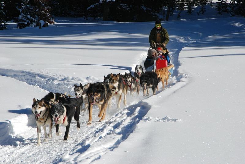chiens de traineaux - sports d'hiver