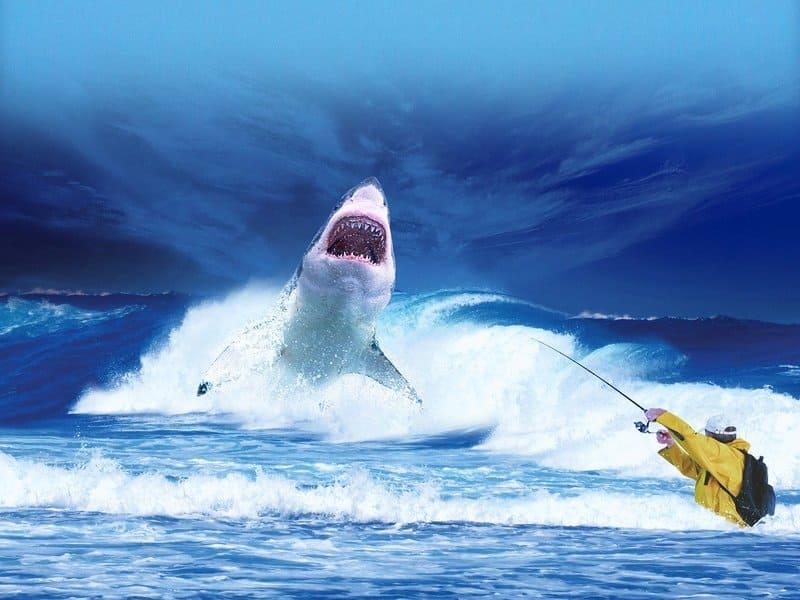 meilleurs spots de pêche - pêcheur légendaire de requin