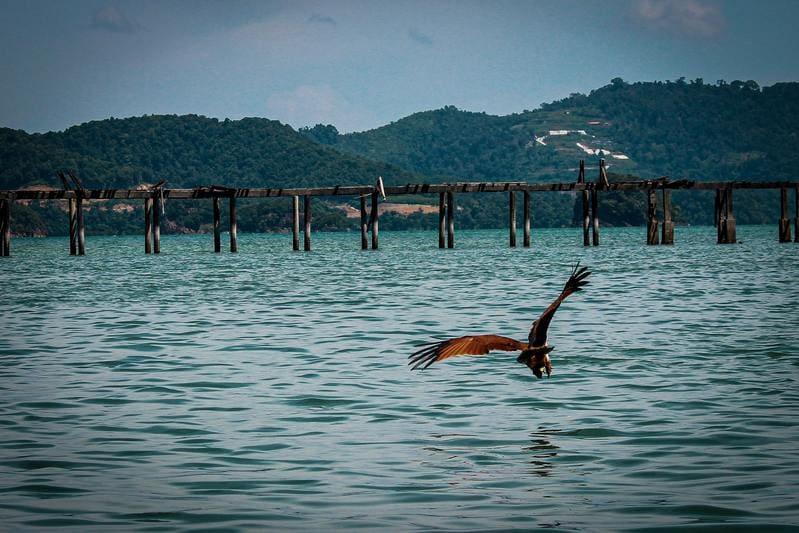 ou partir en avril - Malaisie eau oiseau montagne