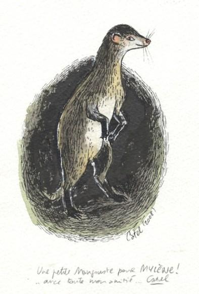 La mangouste vue par Catel