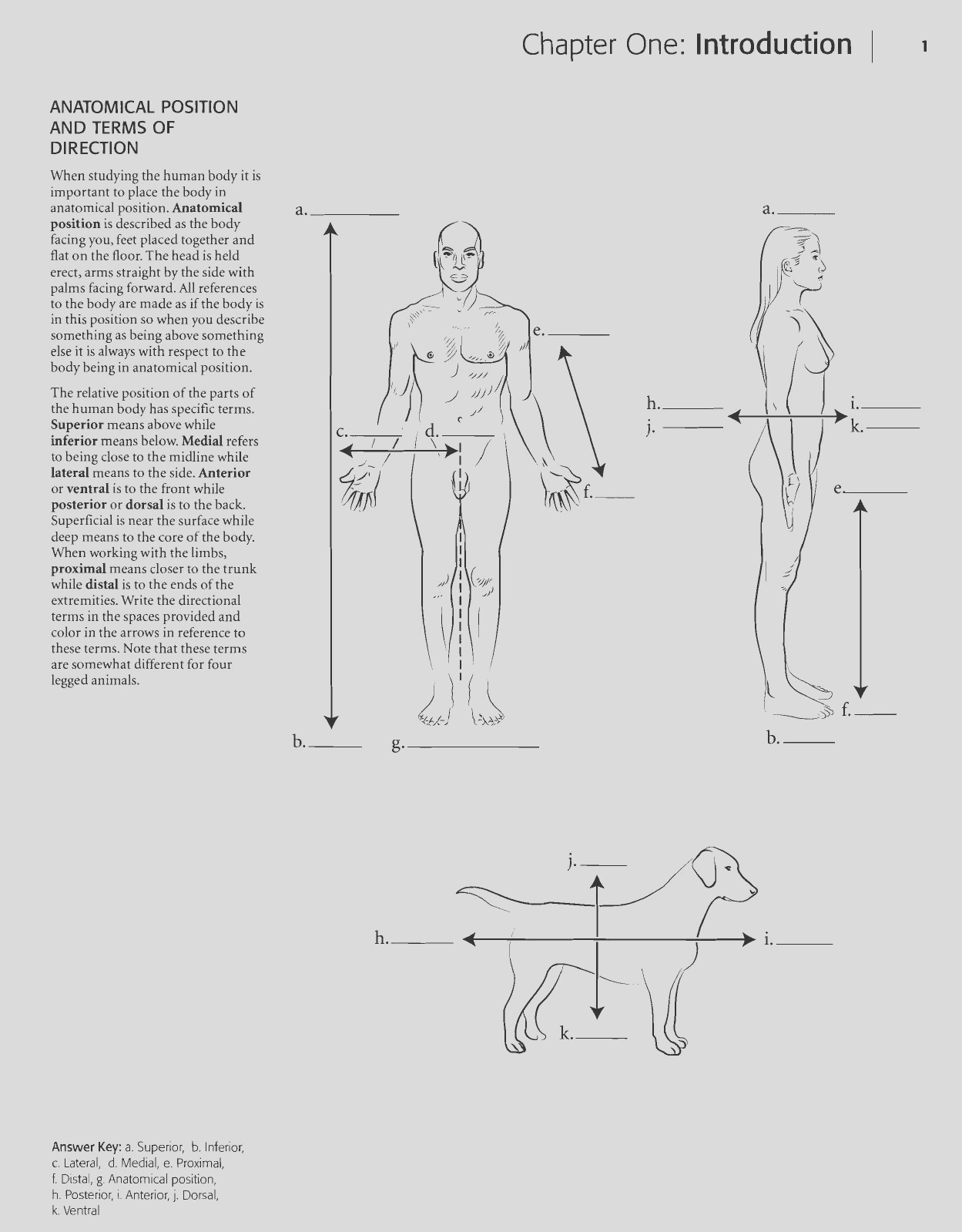 29 Best Of Photos Of Anatomy and Physiology Coloring