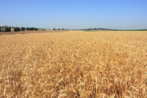 the King has left the palace, and is smiling in the harvest field…